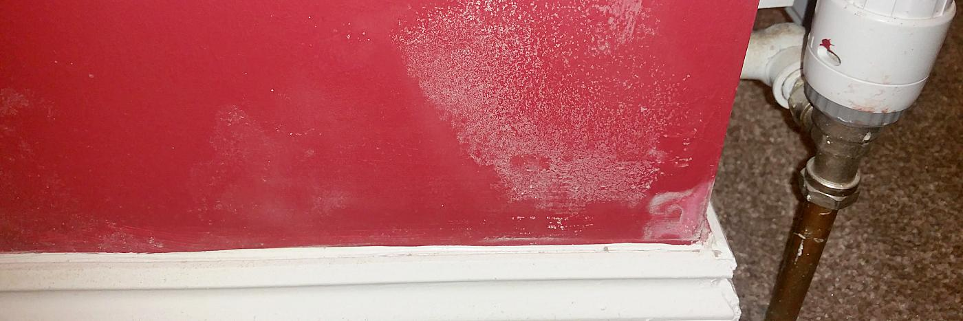 skimmed wall - a partial solution to rising damp