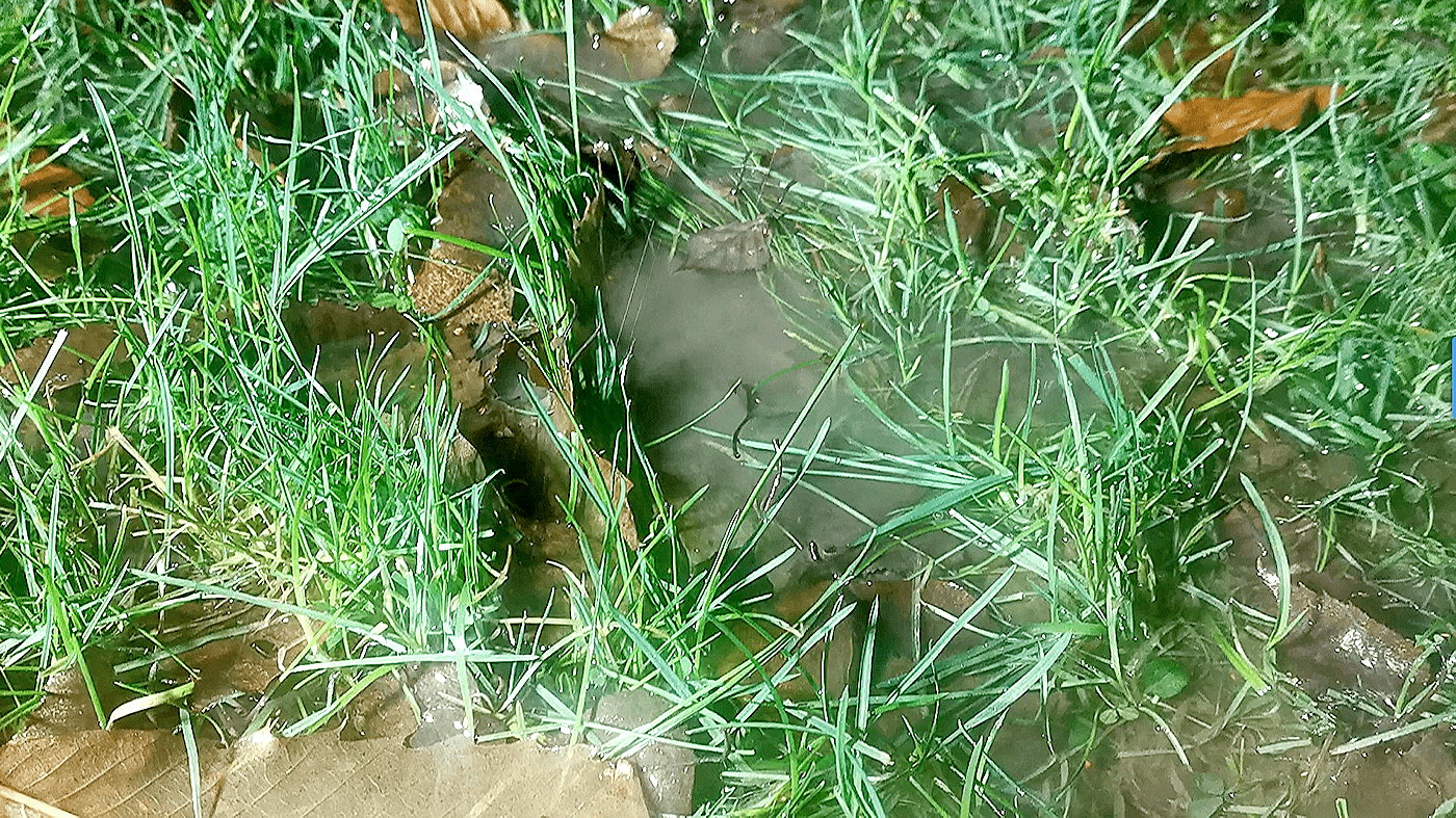 High watertable